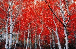 top-5-best-fall-foliage-drives-usa